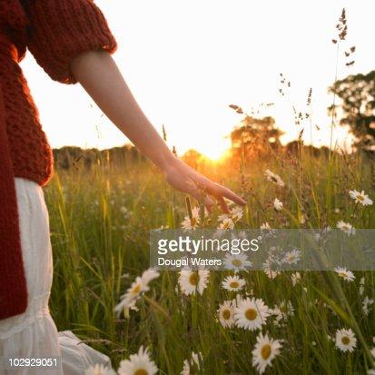 Woman walking through wild flower meadow. : Bildbanksbilder