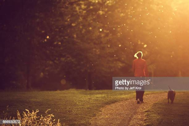 Woman walking with dog in park, warm sunset lighting up hair, mosquitoes, blurred dreamy view.