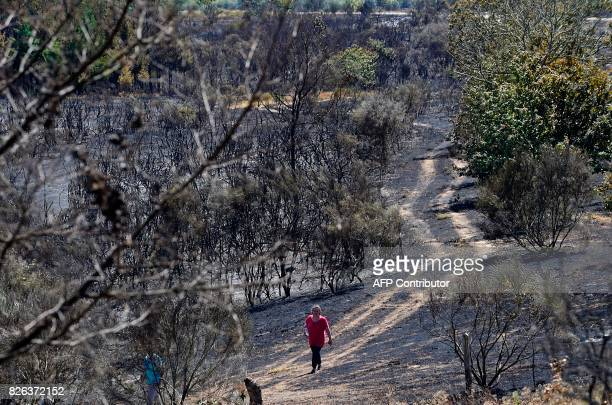 A woman walks along a track in a burned area after a wildfire in Vilardevos next to Verin northwestern Spain on August 4 2017 / AFP PHOTO / MIGUEL...