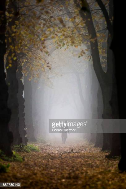 A woman walks along an alley in the foggy morning on October 18 2017 in Berlin Germany
