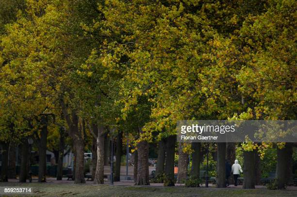 A woman walks along the lake Tegeler See through the Greenwich Promenade on October 07 2017 in Berlin Germany