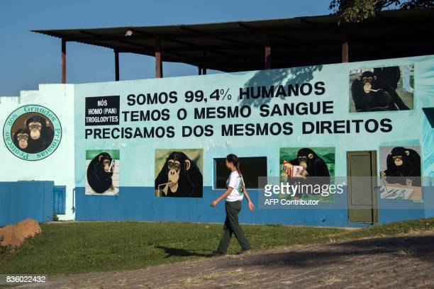 A woman walks at the Great Apes Project a sanctuary for apes in Sorocaba some 100km west of Sao Paulo Brazil on July 28 2017 / AFP PHOTO / NELSON...