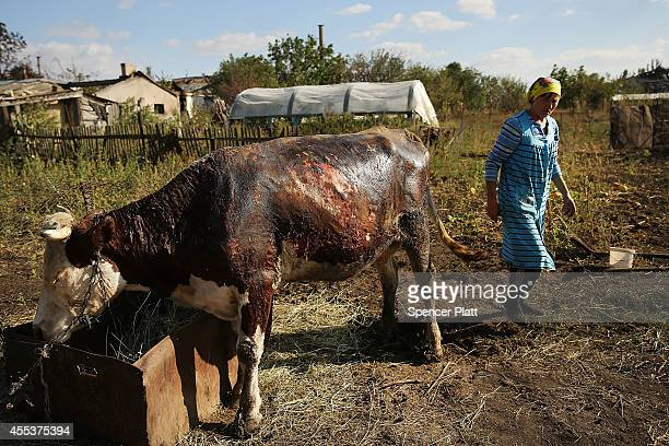 A woman walks by a cow burned by rocket fire in the backyard of a district that witnessed heavy fighting in the war battered city of Lugansk on...