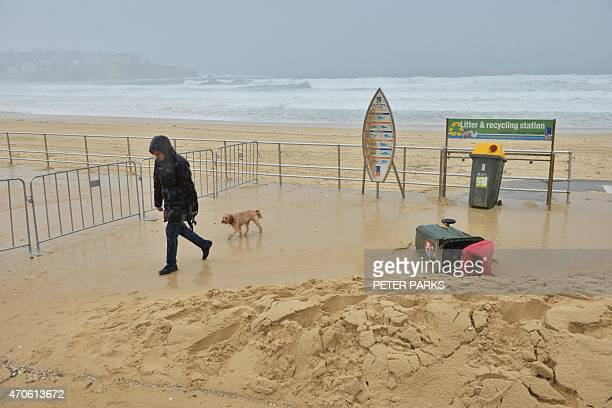 A woman walks her dog in pouring rain and dislodged sand on Sydney's Bondi Beach as the city battles cyclonic wind gusts and nonstop downpours on...