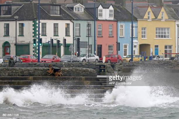 A woman walks her dogs beside the stormy sea in the coastal village of Donaghadee on the Irish Sea coast east of Belfast in Northern Ireland on...