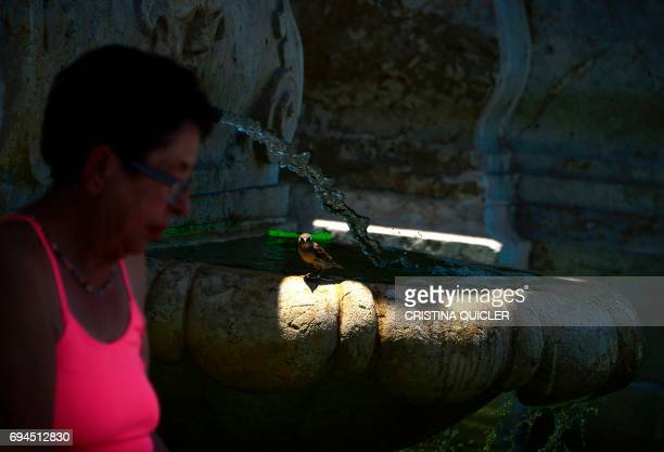 A woman walks past a bird pearched on a fountain in Sevilla on June 10 2017 QUICLER