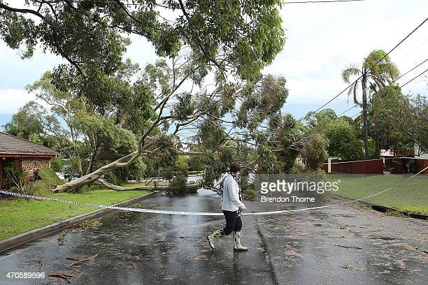 A woman walks past a fallen tree in Collaroy Plateau on April 22 2015 in Sydney Australia Three people have died and more than 200000 are still...