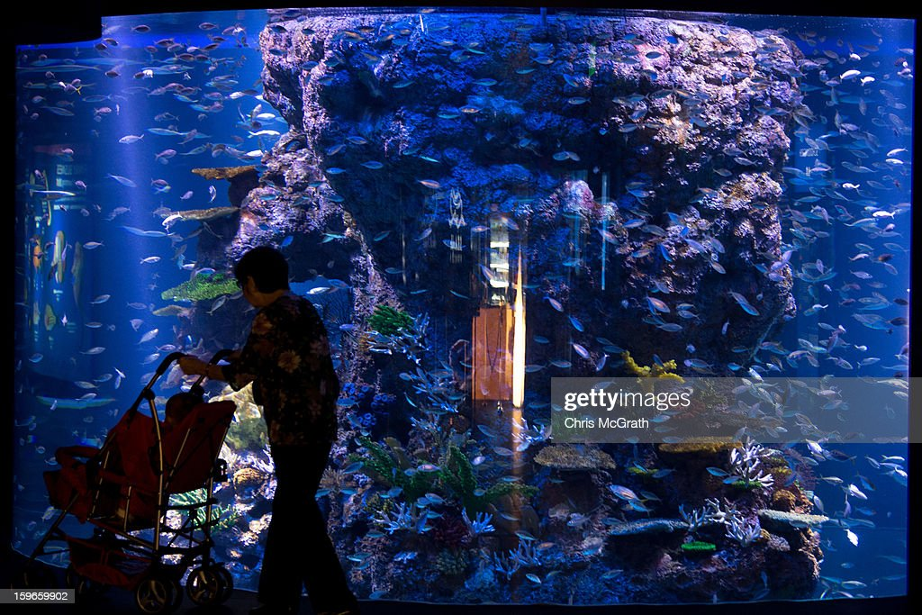 A woman walks past an aquarium display at Resort World Sentosa's Marine Life Park, January 18, 2013 in Singapore. The Marina Life Park is Resort World Sentosa's newest attraction and is the world's largest aquarium, with 100,000 marine animals of over 800 species housed in 45 million litres of water.
