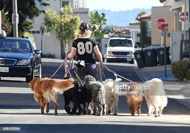 A woman walks six dogs together in Manhattan Beach California November 4 2014 AFP PHOTO / ROBYN BECK