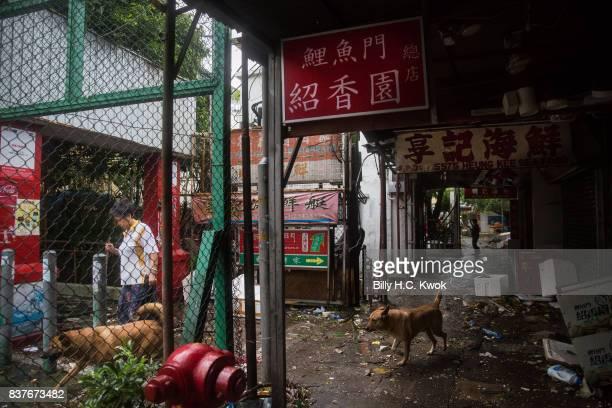 A woman walks the dogs as Typhoon Hato hits Hong Kong on August 23 2017 in Hong Kong Hong Kong Hong Kong's weather authorities raised Typhoon Hato to...