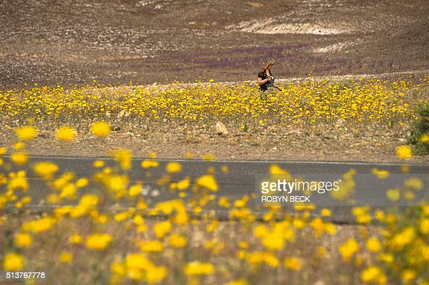 A woman walks through a field of wildflowers in Death Valley National Park in Death Valley California March 3 2016 Unusally heavy rainfall in October...