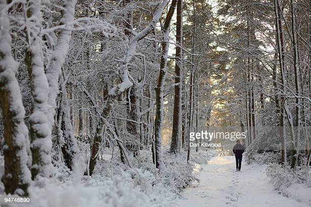A woman walks through a snow covered woodland in the South Downs National Park on December 18 2009 near Coldharbour England Heavy snow fell across...