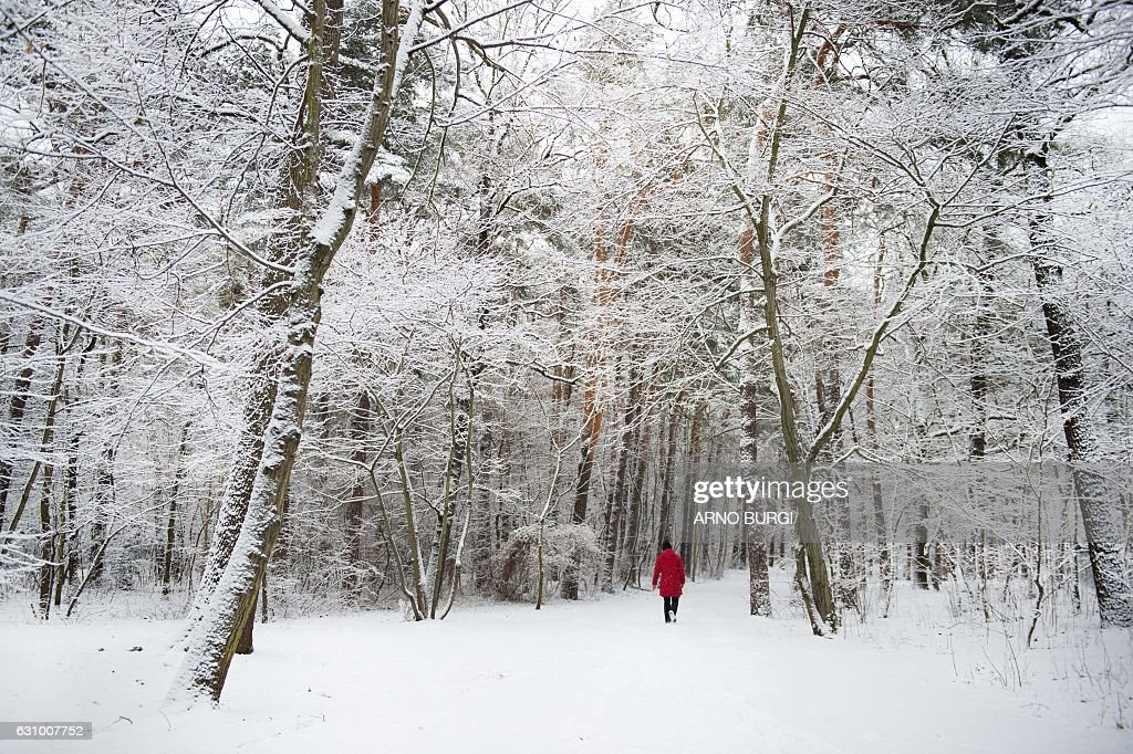 A woman walks through a snowy forest on January 5, 2017 in Dresden, eastern Germany. / AFP / dpa / Arno Burgi / Germany OUT