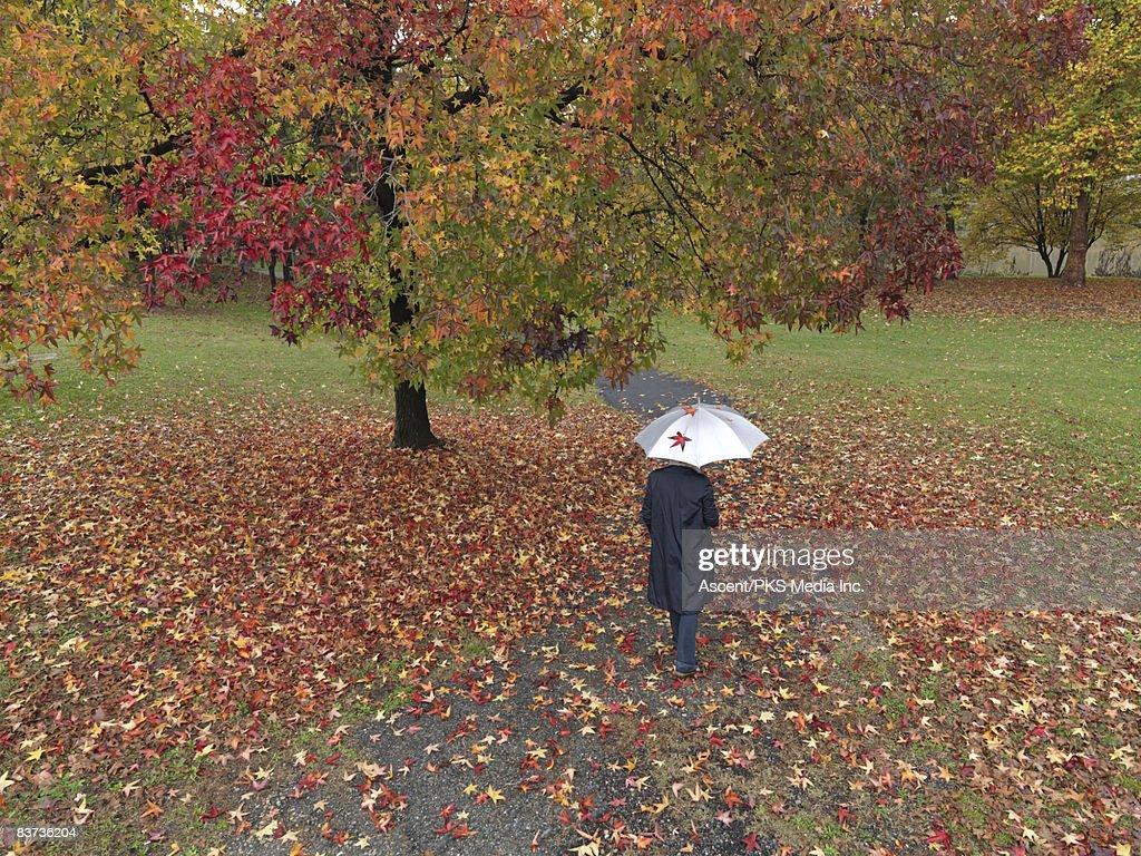 Woman walks through park holding umbrella : Stock Photo