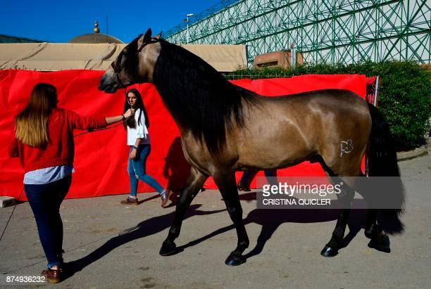 A woman walks with a horse before an exhibition at the Sicab 2017 International Horse fair in Sevilla on November 16 2017 / AFP PHOTO / CRISTINA...