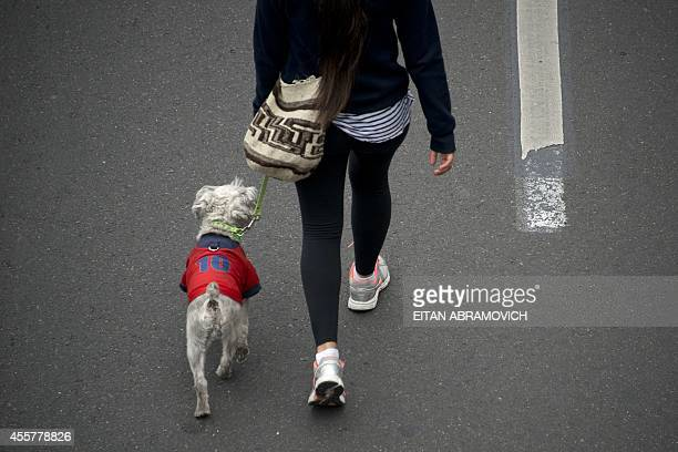 A woman walks with her dog along the 'Ciclovia' by some Bogota's streets temporarily closed for motor vehicles and enabled for cyclists pedestrians...