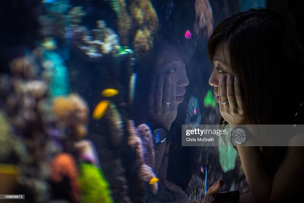 A woman watches fish on display at Resort World Sentosa's Marine Life Park, January 18, 2013 in Singapore. The Marina Life Park is Resort World Sentosa's newest attraction and is the world's largest aquarium, with 100,000 marine animals of over 800 species housed in 45 million litres of water.