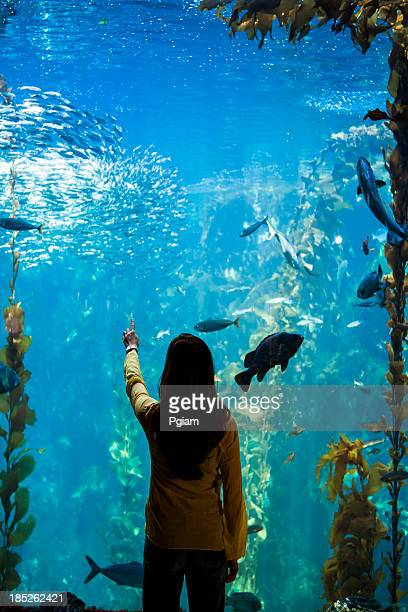 Woman watches sea life and fish underwater at an aquarium