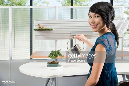 Woman watering a bonsai tree : Stock Photo