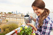 Woman Watering Plant In Container On Rooftop Garden. Smiling