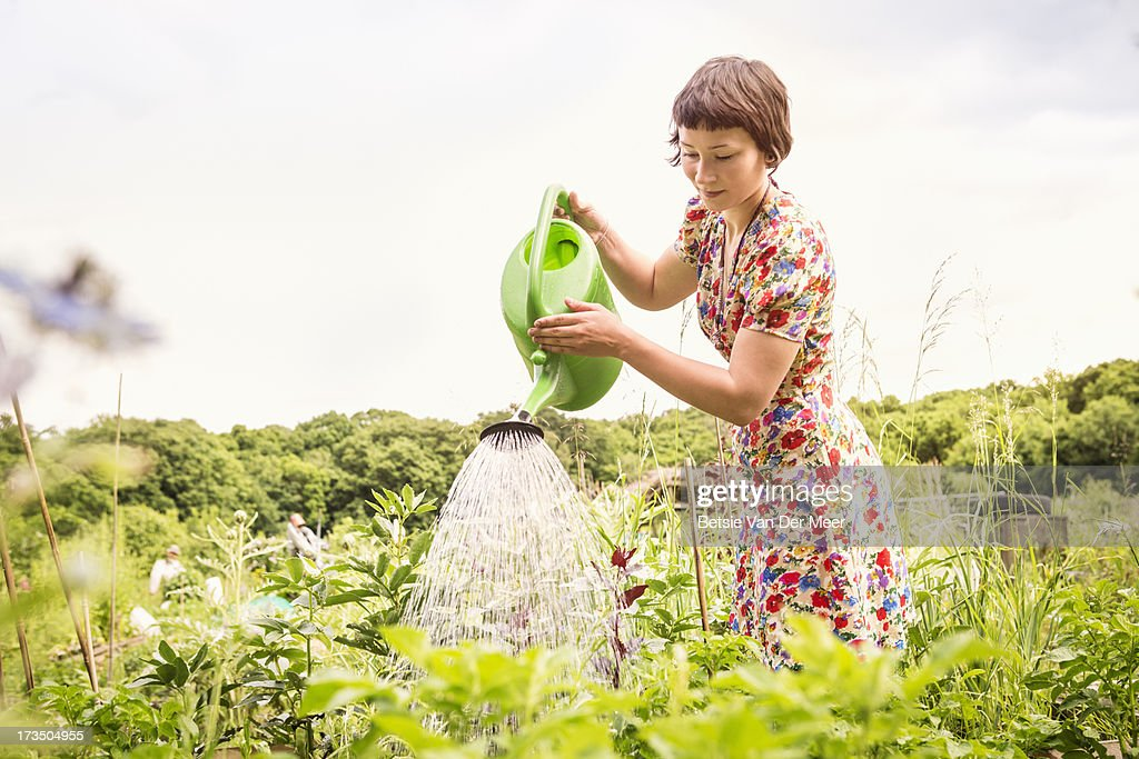 Woman Watering Plants In Allotment Stock Photo Getty Images