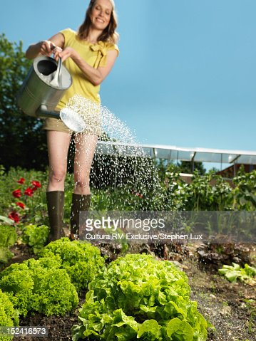 Woman Watering Plants In Garden Stock Photo Getty Images
