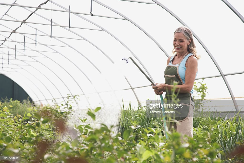 Woman watering plants in greenhouse : Photo