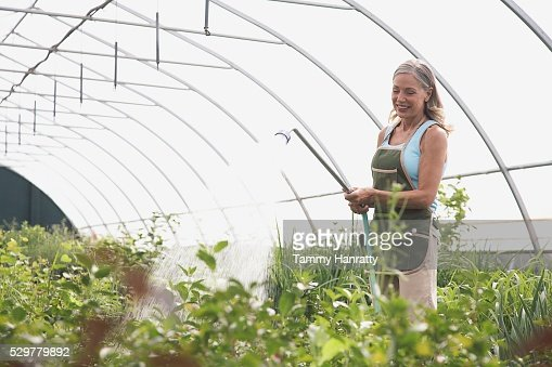 Woman watering plants in greenhouse : Stock Photo