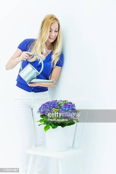Femme arroser Violet Hortensia