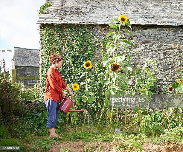 Woman watering sunflowers in garden.