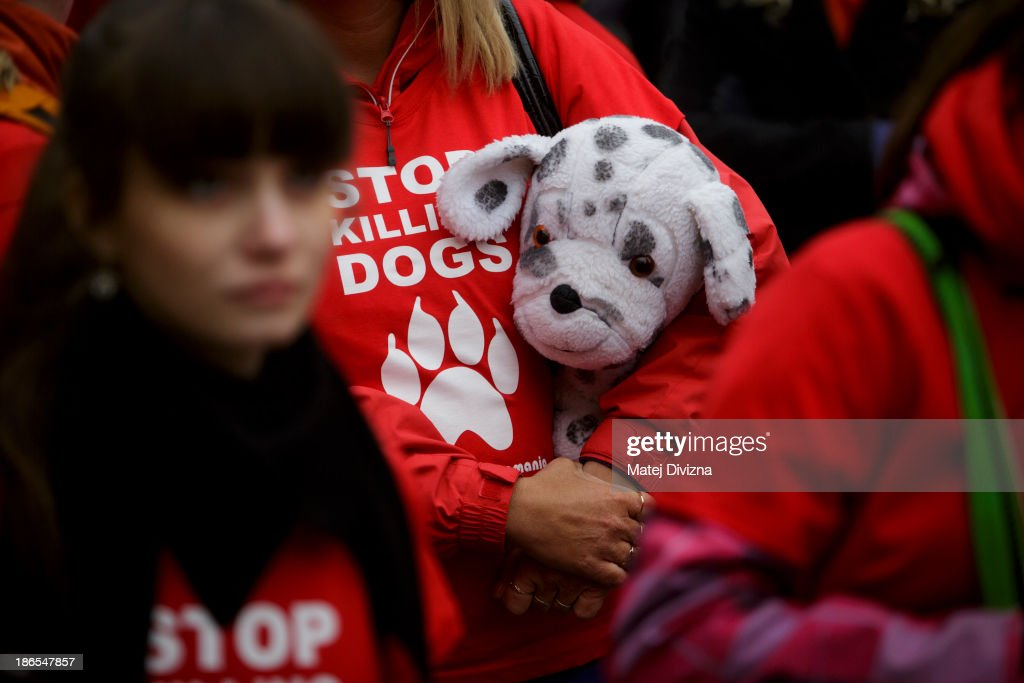 A woman wearing a T-shirt displaying 'Stop Killing Dogs' carries a plush dog as she attends an animal rights activists' protest in the All Saints' Day on November 1, 2013 in Prague, Czech Republic. Activists were protesting against the Romania law for stray dog culling approved by Romania's constitutional court in September this year. According to estimates 65,000 stray dogs live on the streets of Bucharest.
