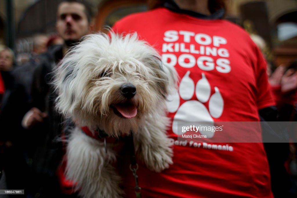 A woman wearing a T-shirt with displaying 'Stop Killing Dogs' carries a dog as she attends an animal rights activists' protest in the All Saints' Day on November 1, 2013 in Prague, Czech Republic. Activists were protesting against the Romania law for stray dog culling approved by Romania's constitutional court in September this year. According to estimates 65,000 stray dogs live on the streets of Bucharest.