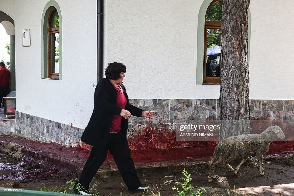 A woman with a sheep walks past the blood of ritually slaughtered sheep, in the village of Babaj Bokes, on May 6, 2016 during celebrations marking Saint George's Day. Saint George is the patron saint of several countries and cities. / AFP / ARMEND