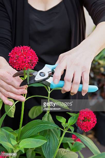 Woman  with arthritic hands gardening