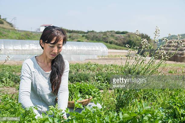 Frau mit Korb mit frischem Gemüse und Kräutern