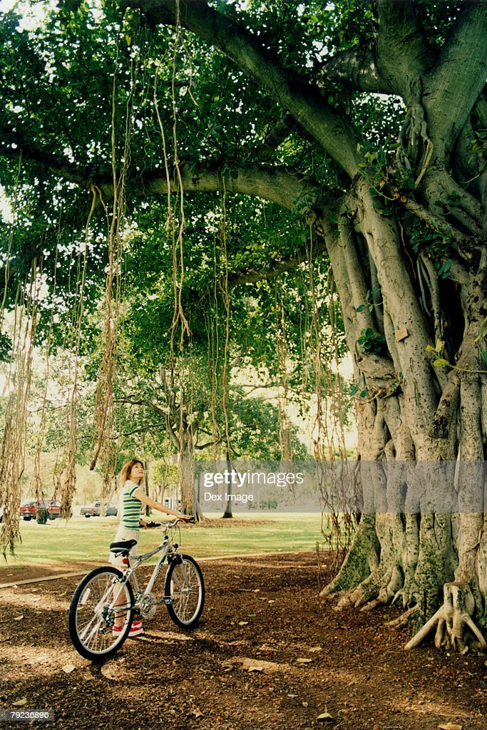 Woman with bicycle, looking at old growth tree : Stock Photo
