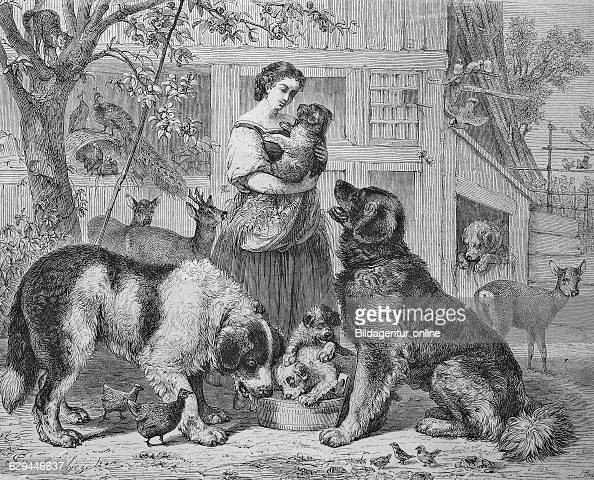 Woman with dogs animal shelter historical engraving 1869