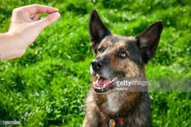 女性彼女の公園の中の犬