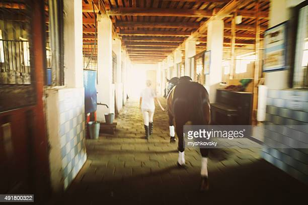 Woman with her horse in stable
