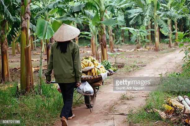 Woman working at banana plantation, Vietnam