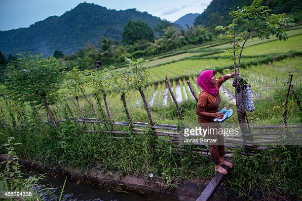 A woman working in a rice field surrounding Leuping Village a few miles south of Banda Aceh Only 500 people out of around 10000 survived those who...