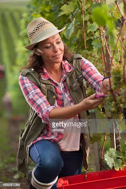 Frau arbeitet im Weingut