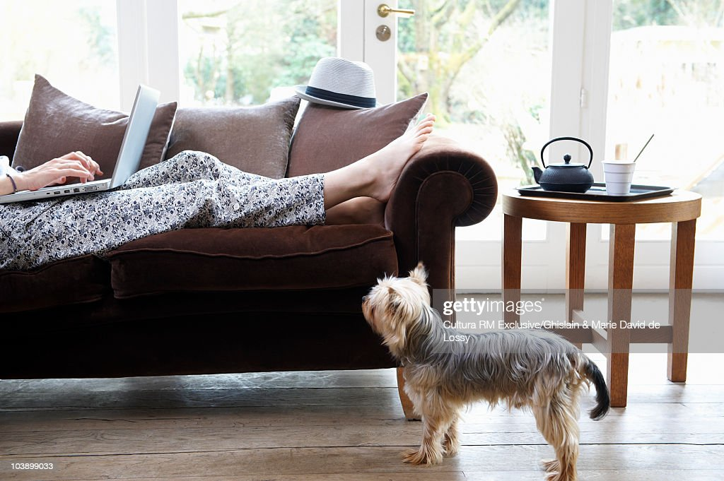Woman working on sofa, dog at her feet : Stock Photo