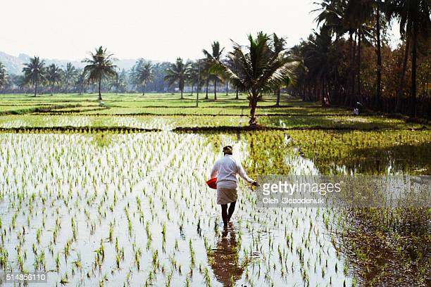Woman working on the rice field