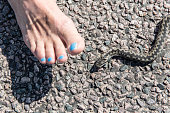 Womans foot and snake