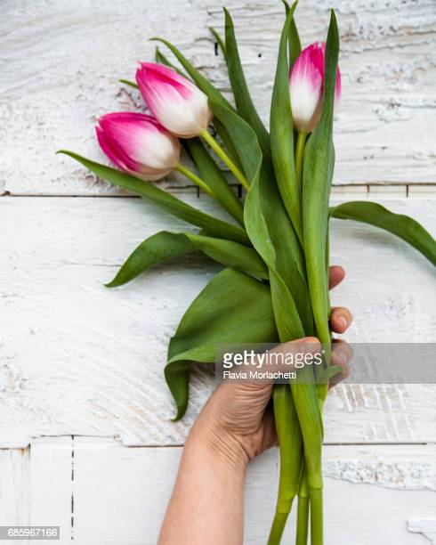Woman's hand holding a 3 pink tulips