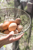 Womans hand holding wire basket of brown eggs