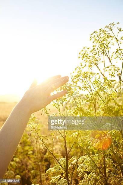 女性の手を感動的な自然の植物