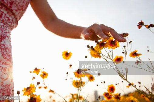 Woman's hand touching wild flowers in meadow : Stockfoto