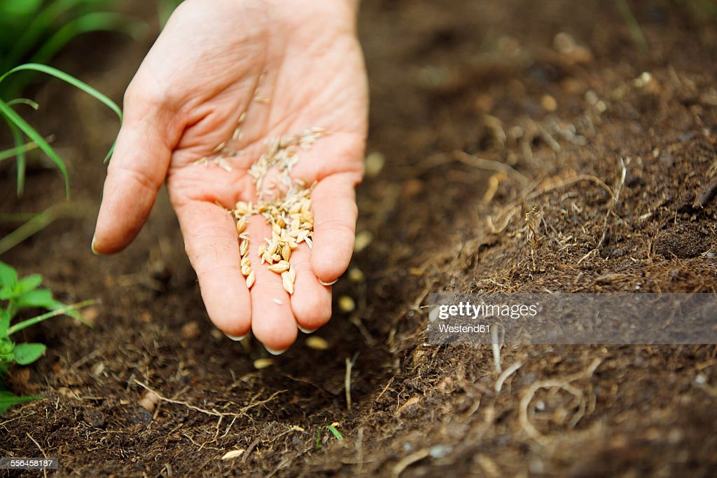 Womans hand with seeds